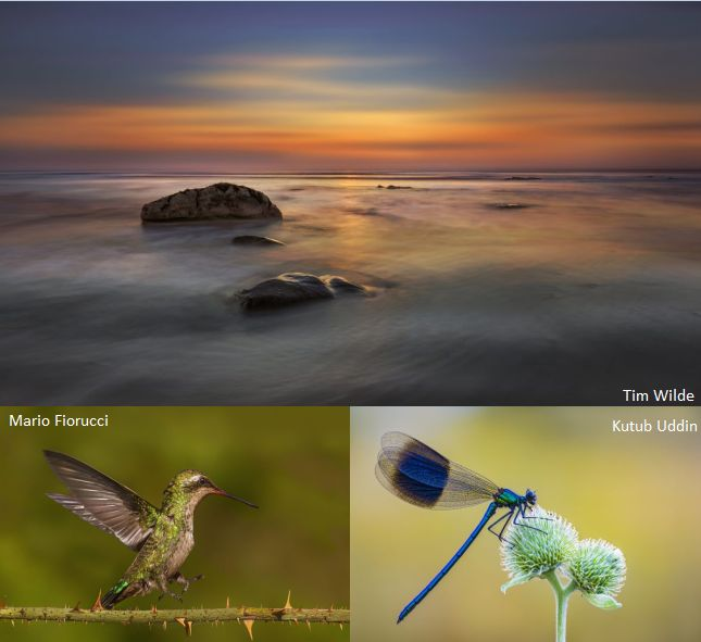 Natural World Photography Competition
