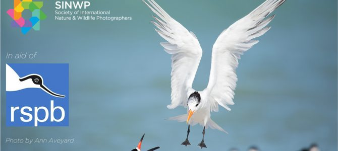SINWP Bird Photographer of the Year Competition 2019 is now open for entries