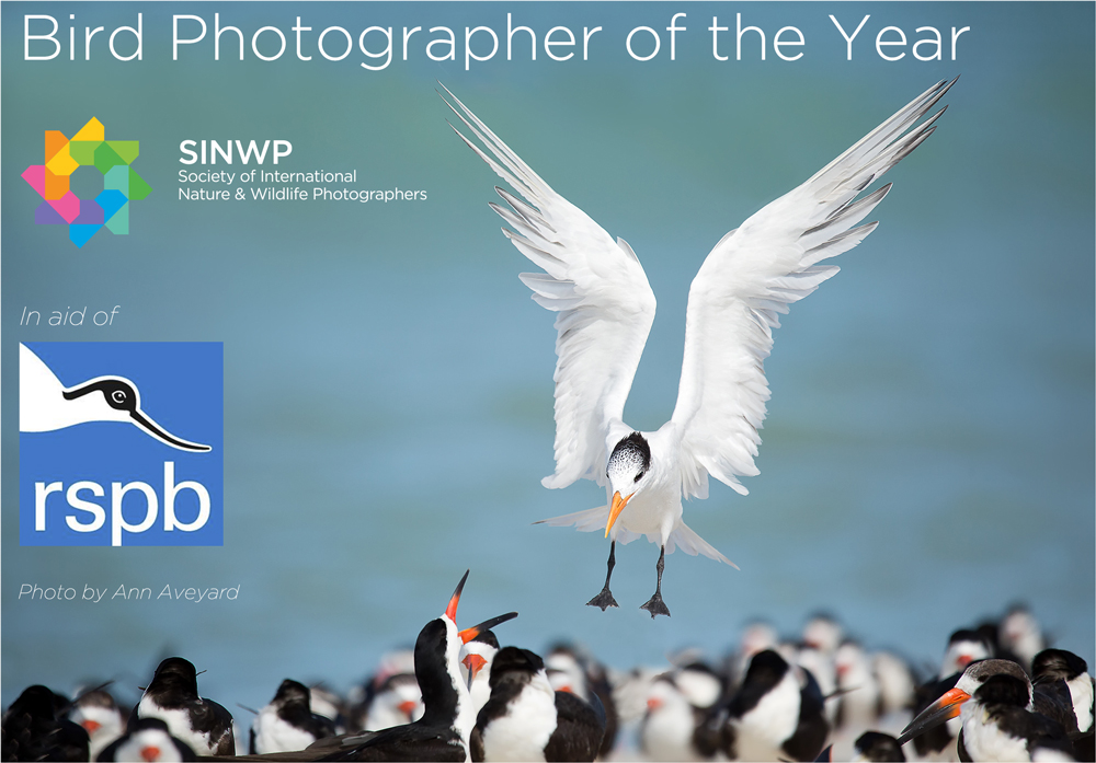 SINWP Bird Photographer of the Year Competition
