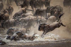 Andy Howe winning image entitled 'The Crossing'