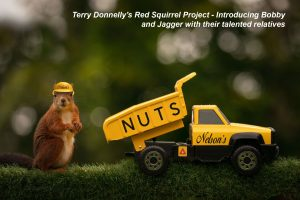 Terry Donnelly's Red Squirrel Project