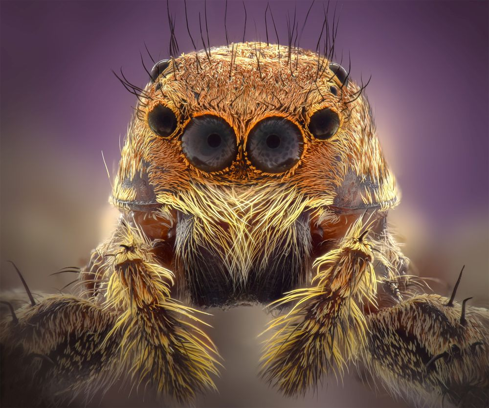 Macro and Close-up Photographer of the Year 2020