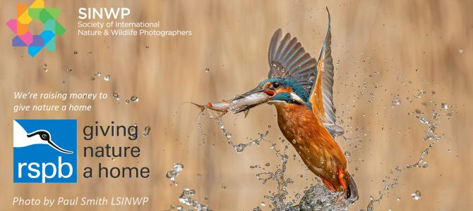 We are incredibly excited to announce our 2021 SINWP Bird Photographer of the Year Competition in aid of RSPB.
