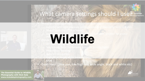 Wildlife Photography Webinars