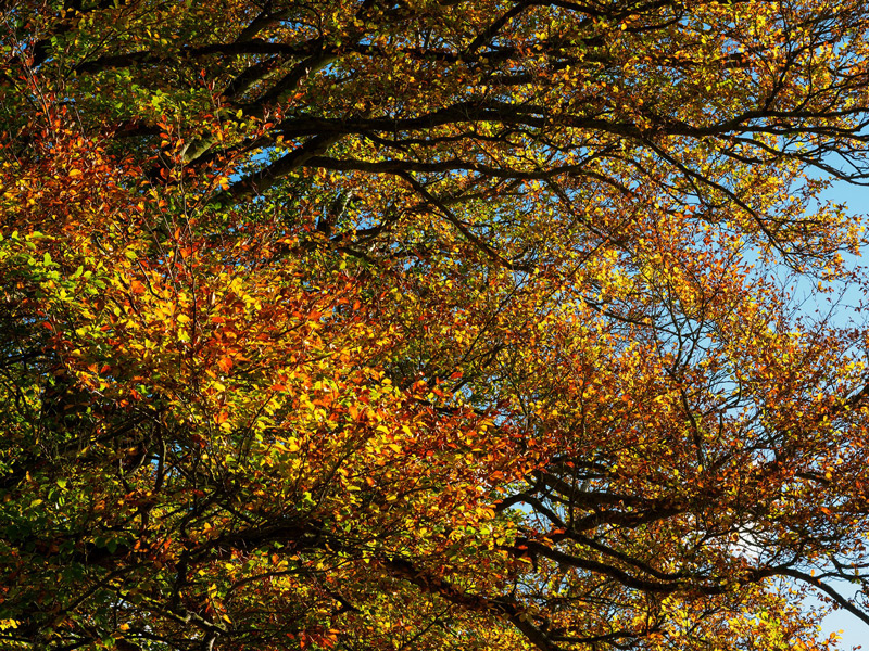autumn colour background